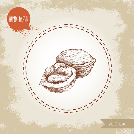 Hand drawn sketch style walnuts composition. Eco food ingredient vector illustration isolated on old looking background. Ilustração