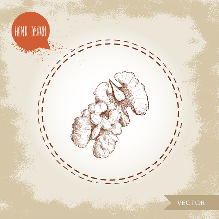 Hand drawn sketch style walnut kernels composition. Eco food vector illustration isolated on vintage background. Food component and snack artwork. Illustration