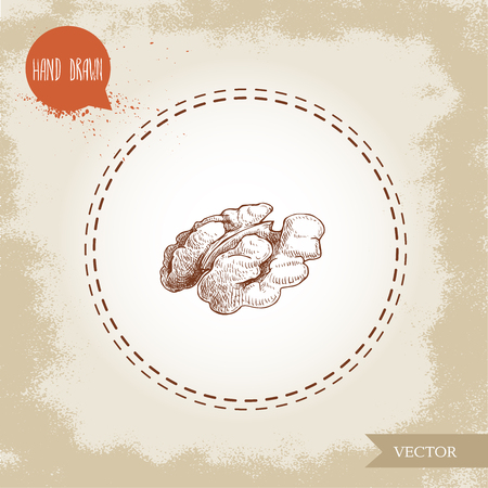 Hand drawn sketch style walnut kernel half. Eco food vector illustration isolated on vintage background. Food component and snack artwork. Ilustrace