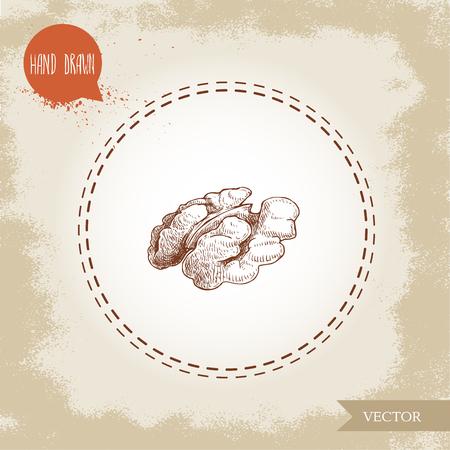 Hand drawn sketch style walnut kernel half. Eco food vector illustration isolated on vintage background. Food component and snack artwork. Illustration