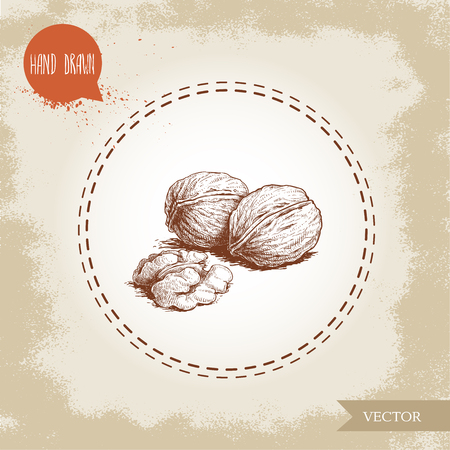 Hand drawn sketch style walnut group. Eco food vector illustration isolated on vintage background. Food component and snack artwork.