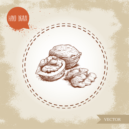 Hand drawn sketch style walnut group. Eco food vector illustration isolated on vintage background. Food component and snack artwork. Imagens - 99332506