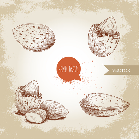 Hand drawn sketch style almond set. Single, group seeds and almond in nutshell. Organic food vector illustrations collection isolated on old background.