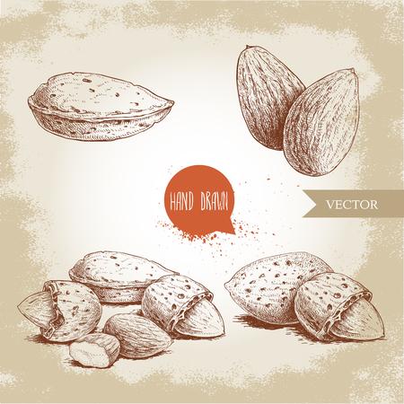 手描きスケッチスタイルアーモンドセット。単一の、グループの種とアーモンドを一言で一言で一覧にします。古い背景に分離された有機食品ベク  イラスト・ベクター素材