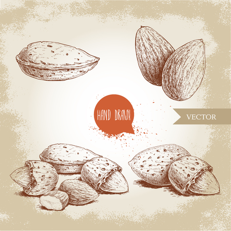 Hand drawn sketch style almond set. Single, group seeds and almond in nutshells group. Organic food vector illustrations collection isolated on old background.