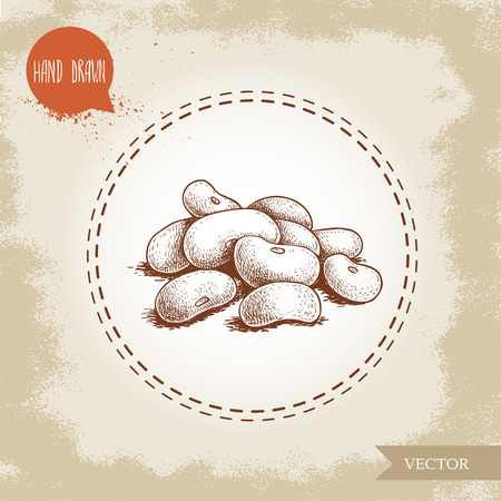 Hand drawn sketch style, white beans vector illustration Ilustração