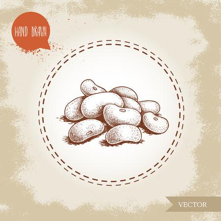 Style de croquis dessiné à la main, illustration vectorielle de haricots blancs Vecteurs