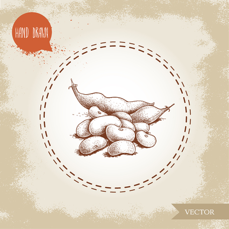 Hand drawn sketch style of white beans and pod vector illustration Illustration