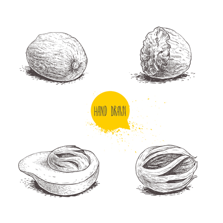 Hand drawn sketch style nutmegs set. Spice and condiment vector illustration isolated on white background. Dried seeds and fresh mace fruits. Ilustração
