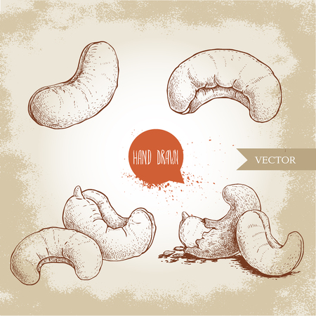 Hand drawn sketch style cashew set. Single, whole and group nuts composition. Organic food vector illustrations. Artwork isolated on retro background.