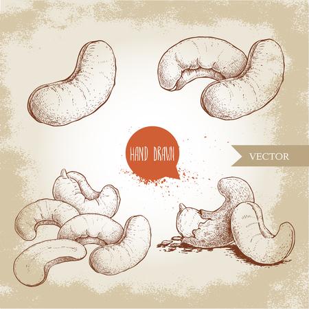 Hand drawn sketch style cashew set. Single, whole fresh and roasted nuts. Organic food vector illustrations. Artwork isolated on retro background. Ilustração