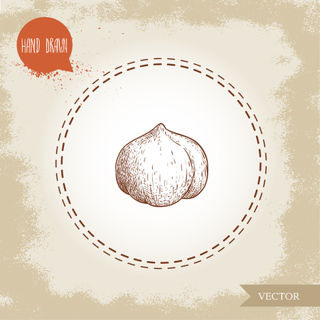 Hand drawn sketch style peeled single whole hazelnut seed. Eco healthy food vector illustration. Forest nut. Isolated on old background. Ilustração