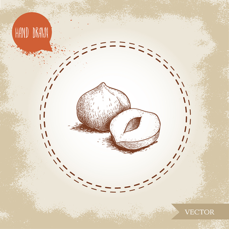 Hand drawn sketch style peeled hazelnut seeds composition. Eco healthy food vector illustration. Forest nut. Isolated on old background. Иллюстрация