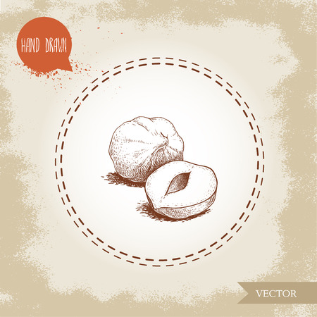 Hand drawn sketch style peeled hazelnut seeds group. Eco healthy food vector illustration. Forest nut. Isolated on old background.
