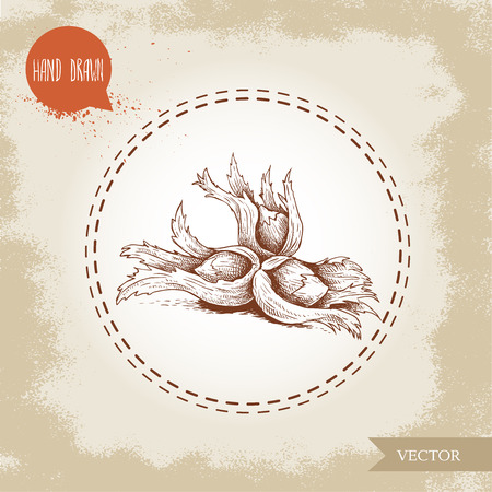 Hand drawn sketch style hazelnuts in their clusters. Forest nuts (filbert, cobnuts). Vector illustration isolated on old background.