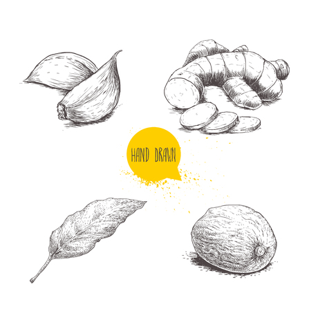 Hand drawn sketch spices set. Garlic cloves, sliced ginger root, bay leaf and nutmeg. Herbs, condiments and spices vector illustration isolated on white background.