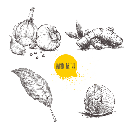 Hand drawn sketch spices set. Garlic composition, ginger root, bay leaf and half of nutmeg. Herbs, condiments and spices vector illustration isolated on white background.