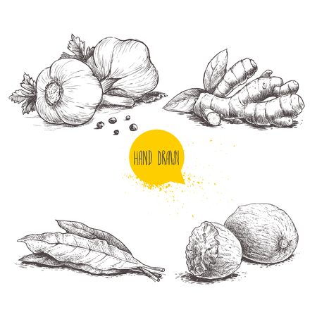 Hand drawn sketch spices set. Garlic composition with parsley, ginger root, bay leaves and nutmegs. Herbs, condiments and spices vector illustration isolated on white background.