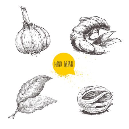 Insieme di spezie schizzo disegnato a mano. Aglio, radice di zenzero, alloro e noce moscata macis. Erbe, condimenti e spezie illustrazione vettoriale isolato su sfondo bianco.