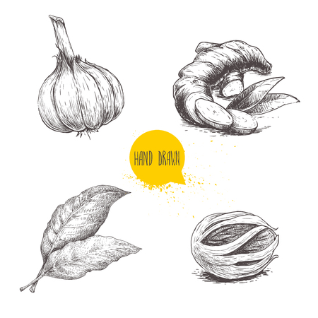 Hand drawn sketch spices set. Garlic, ginger root, bay leaves and nutmeg mace. Herbs, condiments and spices vector illustration isolated on white background.