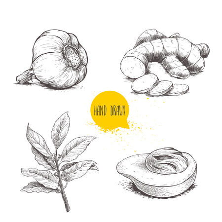 Hand drawn sketch spices set. Garlic, ginger root with cuts, bay leaves branch and nutmeg mace fruit. Herbs, condiments and spices vector illustration isolated on white background.