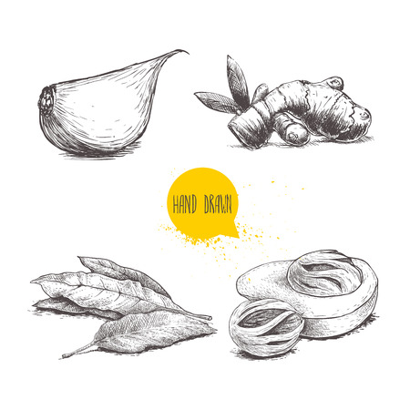 Hand drawn sketch spices set. Garlic clove, ginger root, bay leaves bunch and nutmeg mace fruits. Herbs, condiments and spices vector illustration isolated on white background. Ilustração