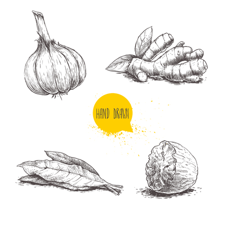 Hand drawn sketch spices set. Garlic, ginger root, bay leaves bunch and nutmeg. Herbs, condiments and spices vector illustration isolated on white background.