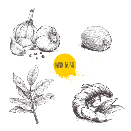 Hand drawn sketch spices set. Garlic composition with black pepper seeds, ginger root, bay leaves branch and nutmeg. Herbs, condiments and spices vector illustration isolated on white background.