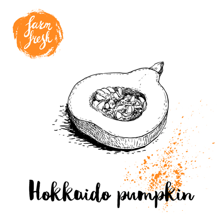 Hand drawn sketch half of hokkaido pumpkin. Kuri with seeds and slice. Autumn fruit. Seasonal symbol. Healthy nutrition vector illustration poster. Isolated on white background.