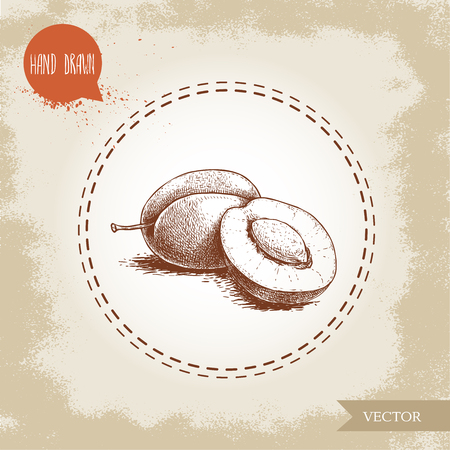 Hand drawn sketch style plums group. Whole and half with seed. Organic eco fruit vector illustration. Isolated on old looking background.