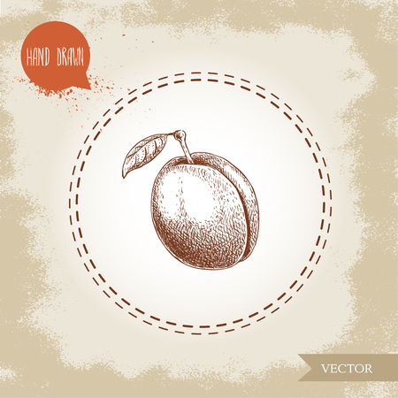 Hand drawn sketch style plum with leaf. Organic eco fruit vector illustration. Isolated on old looking background.