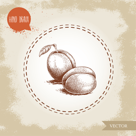Hand drawn sketch style plums group. Organic eco fruit vector illustration. Isolated on old looking background.