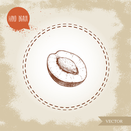 Hand drawn sketch style half of plum with seed. Organic eco fruit vector illustration. Isolated on old looking background. Ilustração