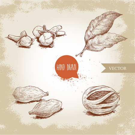 Hand drawn sketch spices set. Bay leaves, nutmeg fruit, cardamoms and cloves. Herbs, condiments and spices vector illustration isolated on old background. Illustration