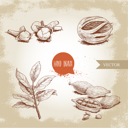 Hand drawn sketch spices set. Bay leaves branch, nutmeg fruit, cardamoms and cloves. Herbs, condiments and spices vector illustration isolated on old background. Illustration