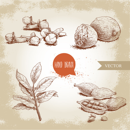 Hand drawn sketch spices set. Bay leaves branch, nutmegs, cardamoms and cloves. Herbs, condiments and spices vector illustration isolated on old background. Illustration