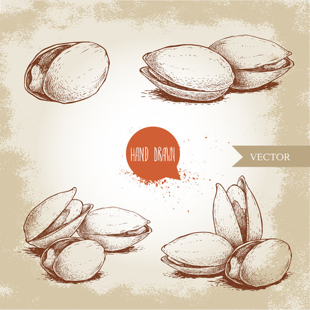 Hand drawn pistachios set. Open and fried fresh organic food. Nuts illustrations isolated on vintage background.
