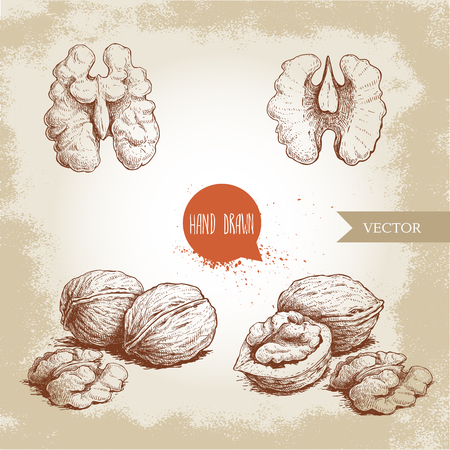 Hand drawn sketch style walnuts set. Whole, half and walnut seed. Eco healthy food vector illustration. Isolated on old looking background. Retro style.