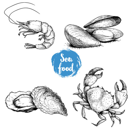 Seafood sketches set. Fresh shrimp, mussels and oysters, crab. Sea market products collection. Vector illustration isolated on white background.  イラスト・ベクター素材
