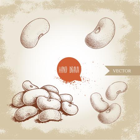 Ensemble de haricots blancs de style croquis dessinés à la main. Célibataires et groupe. Collection d'illustration vectorielle d'aliments diététiques sains isolés sur fond ancien. Ingrédient alimentaire cru.