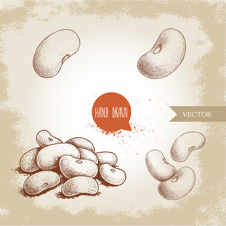Hand drawn sketch style white beans set. Singles and group. Collection of vector illustration of healthy diet food isolated on old looking background. Raw food ingredient.