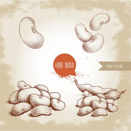 Set di fagioli bianchi in stile schizzo disegnato a mano. Singoli e di gruppo. Raccolta di illustrazione vettoriale di cibo dieta sana isolato su sfondo vecchio. Ingrediente alimentare crudo.