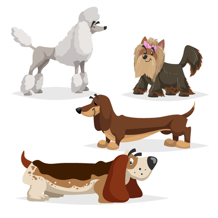 Cartoon purebred dogs set. Poodle, yorkshire terrier, dachshund and basset hound. Cheerful and aodrable pets. Vector illustrations with shadows isolated on white background. Vettoriali
