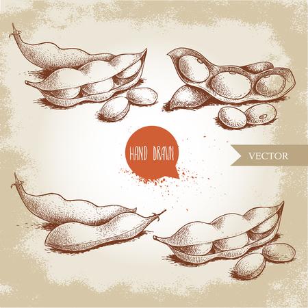 Conjunto de bocetos dibujados a mano de judías verdes edamame. Colección de composiciones de ilustraciones de soja aislada sobre fondo antiguo. Comida sana étnica y japonesa. Ilustración vectorial.
