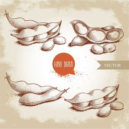 Hand drawn sketches set of edamame green beans. Soybeans artwork compositions collection  isolated on old background. Ethnic and japanese healthfood. Vector illustration. Ilustração