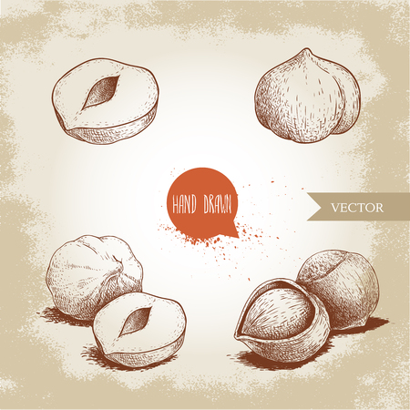 Hazelnuts set. Whole, peeled, sigles and group. Hand drawn sketch style illustrations collection. Vector drawings. Illustration