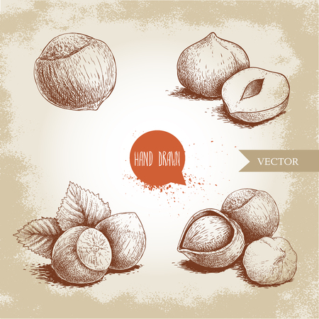 Hazelnuts set. Whole, peeled, sigles and groupwith leaves. Hand drawn sketch style illustrations collection. Vector drawings idolated on old background. Illustration