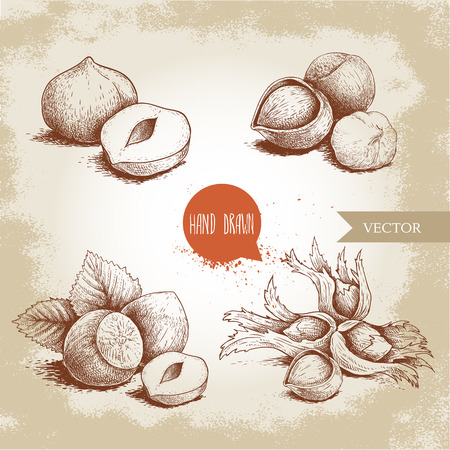 Hazelnuts set. Whole, peeled, sigles and groupwith leaves. Hand drawn sketch style illustrations collection. Vector drawings idolated on old background. Banque d'images - 111953719