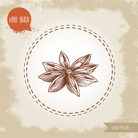 Hand drawn sketch style anise star. Engraved spice vector illustration isolated on old looking background. Illustration