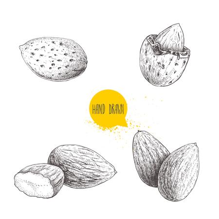 Handgezeichnete Skizze Stil Mandel-Set. Einzel-, Gruppensamen und Mandeln in der Nussschale. Bio-Lebensmittel-Vektor-Illustrationen-Sammlung isoliert auf weißem Hintergrund.